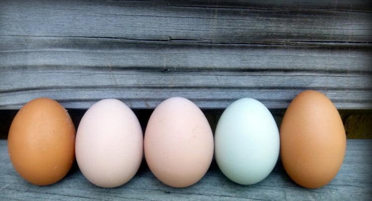 porque mis gallina ponen pocos huevos 1