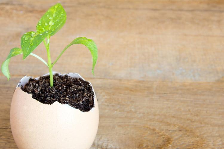 10 formas fantasticas de reutilizar las cascaras de huevos