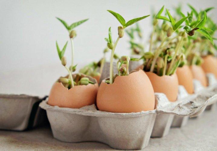 formas de usar las cascaras de huevo