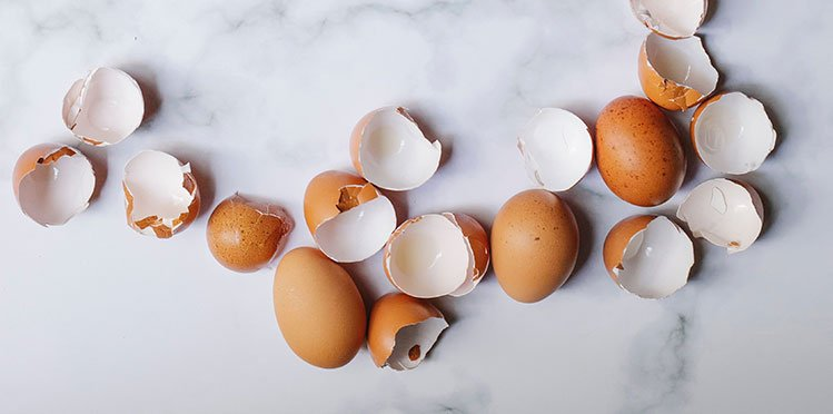 Gallinas estan rompiendo sus huevos