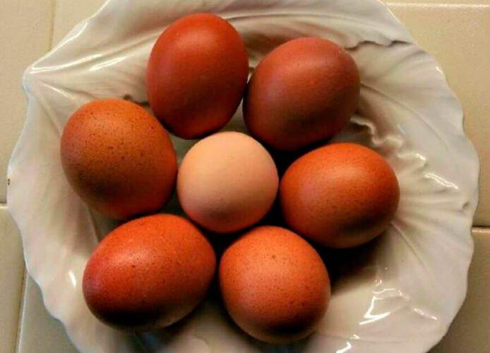 Huevos de color chocolate